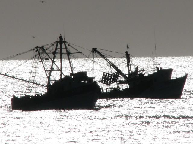 Shrimp boats anchored in silouette at Campo Uno