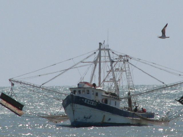 Shrimp boat and bird