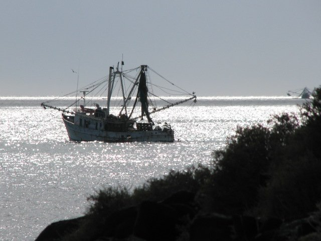 More shrimp boats in Campo Uno