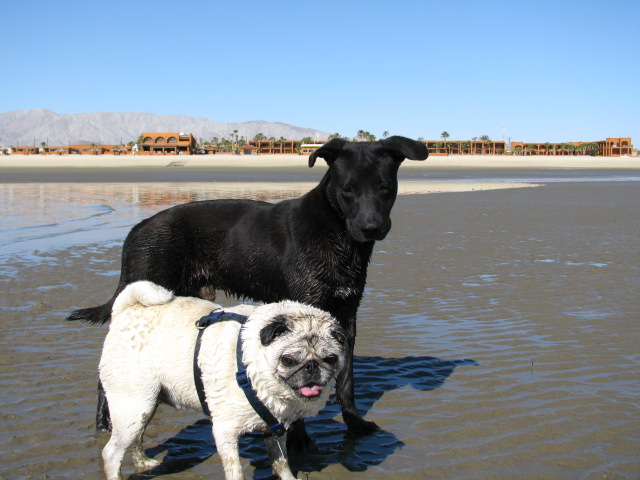 Zorro and Ray's first photo in San Felipe